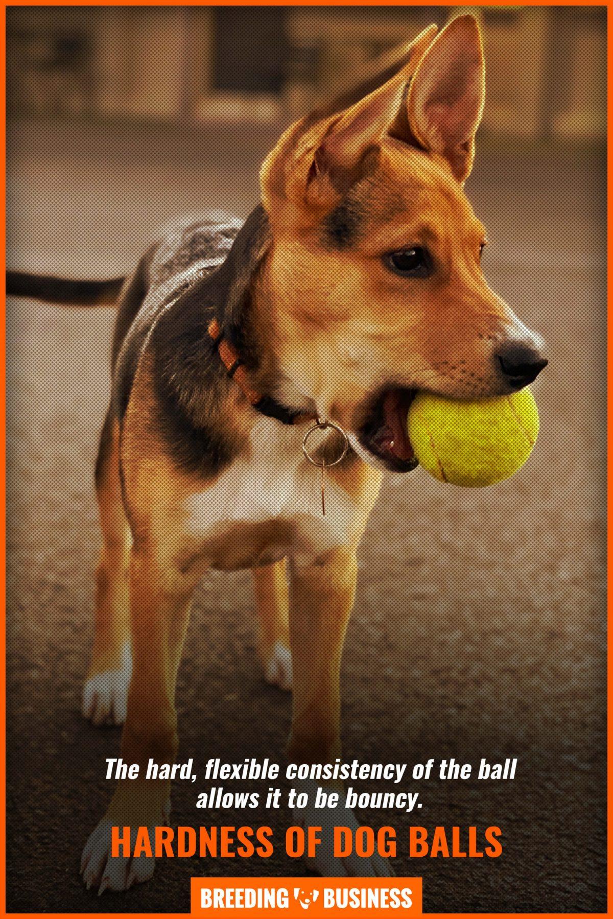 hardness of dog balls
