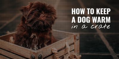 How To Keep a Dog Warm in a Crate