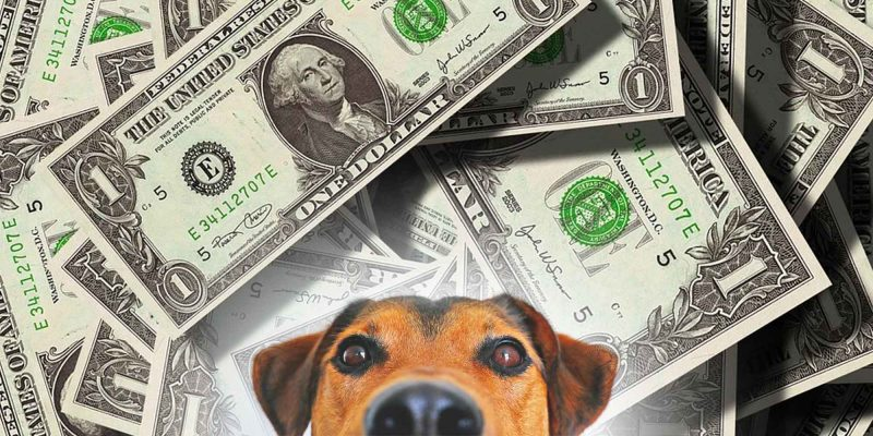 Is Dog Breeding Profitable