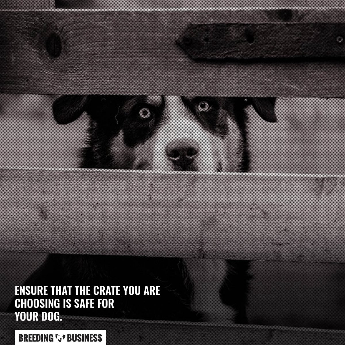 large dog crate safety