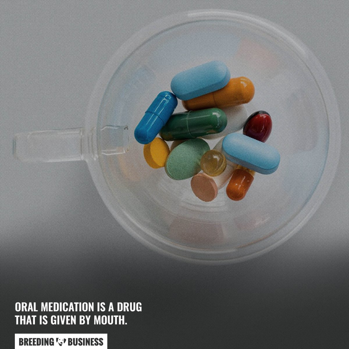 oral dog medication