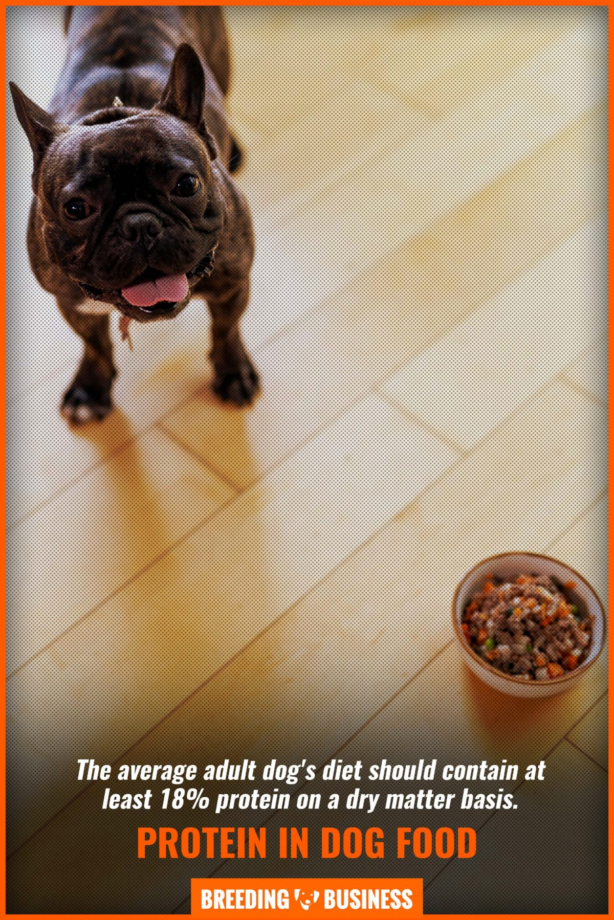 protein in dog food