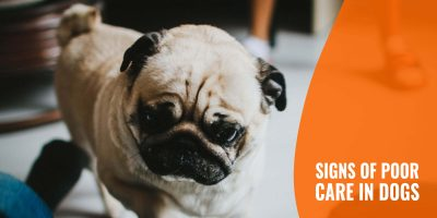 20 Signs of Poor Care in Dogs