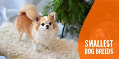 20 Smallest Dog Breeds