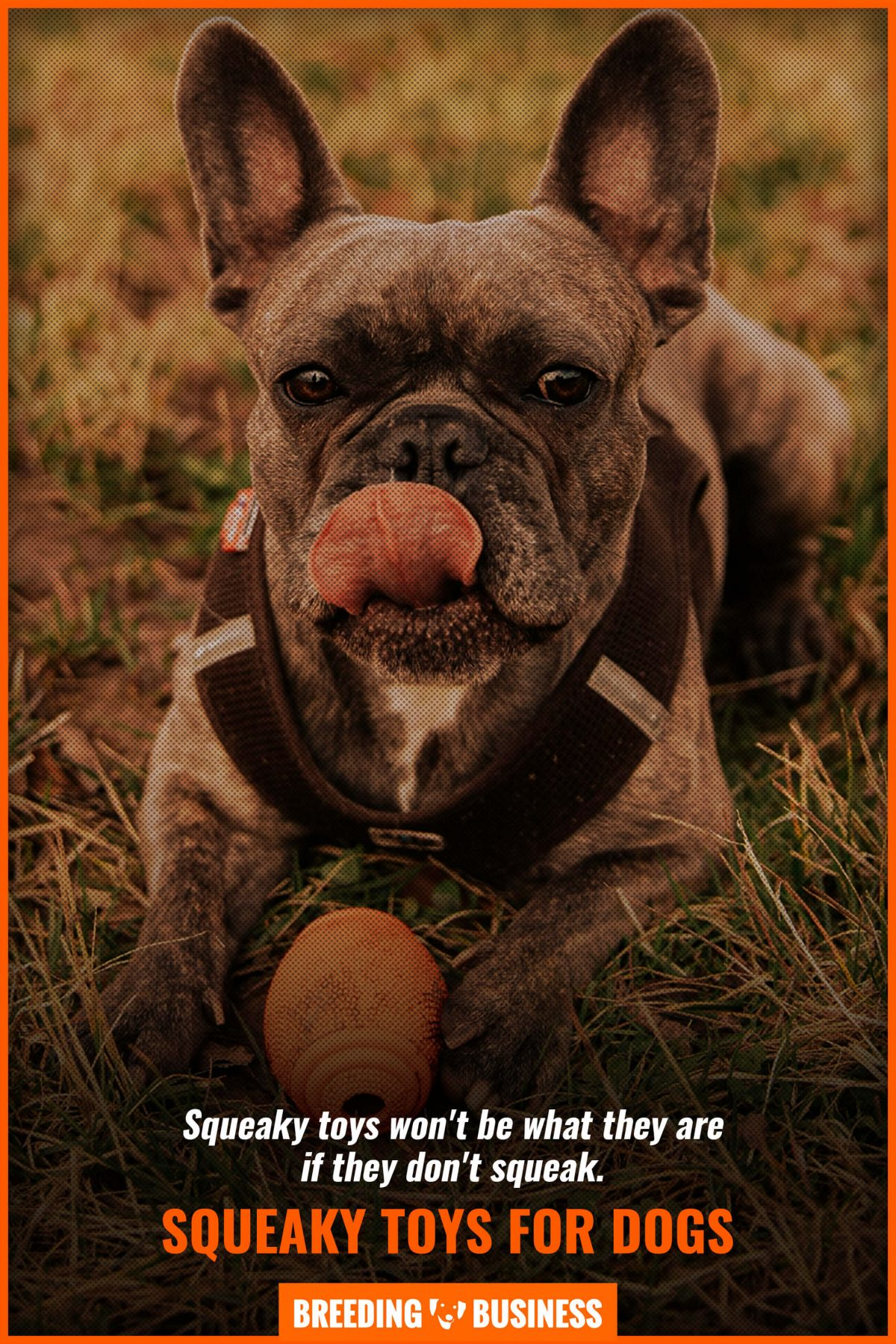 squeaky toys for dogs