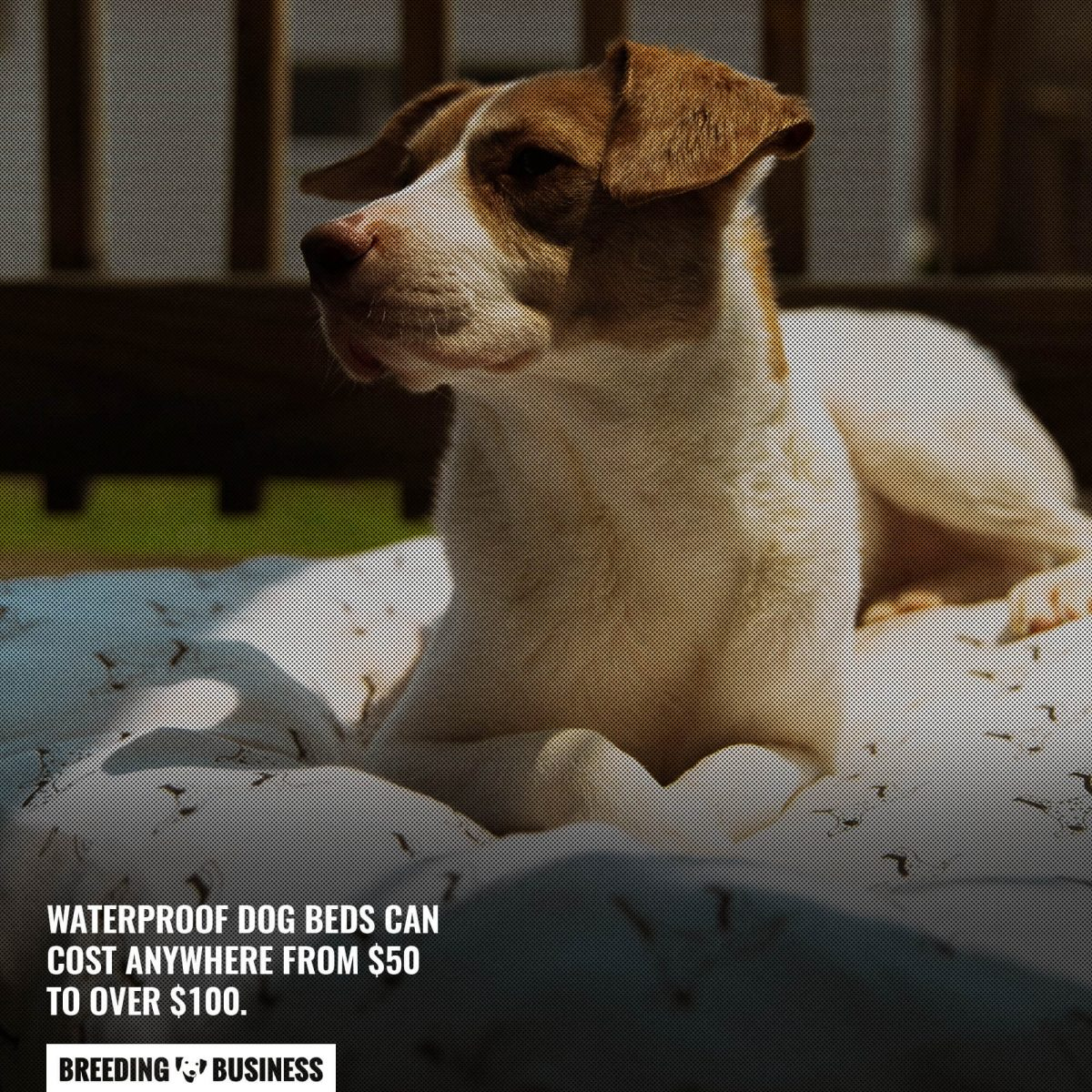 waterproof dog bed cost