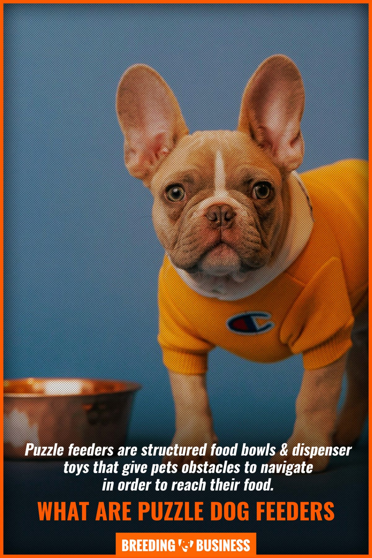 what are puzzle dog feeders