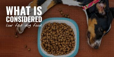 What Is Considered Low-Fat Dog Food