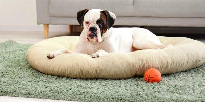 Best Donut Dog Beds