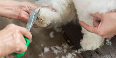 Buying Guide: Dog Grooming Scissors, Thinning Shears & Clippers