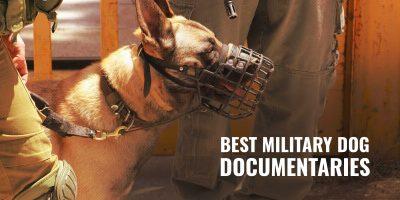 The Best Military Dog Documentaries On K9 Dog Breeding