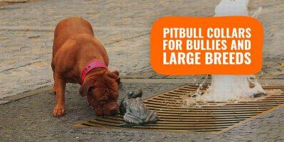 5 Best Pitbull Collars For Bullies, Mastiffs & Large Dogs