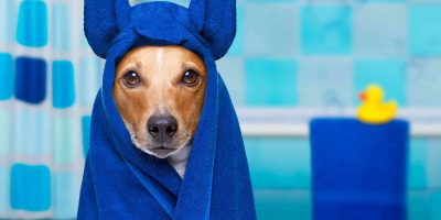 The Booster Bath — Is It The #1 Dog Bath Tub?