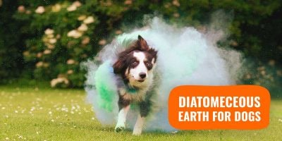 Diatomaceous Earth: Natural Alternative To Dewormers and Flea Treatments
