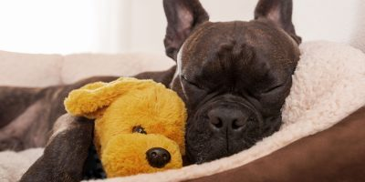 7 Best Dog Beds For Anxiety – Soothing, Comfortable & Relaxing Dog Beds