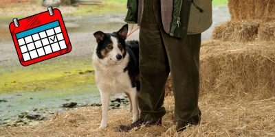 A Dog Breeder's Typical Day — The Right Mindset
