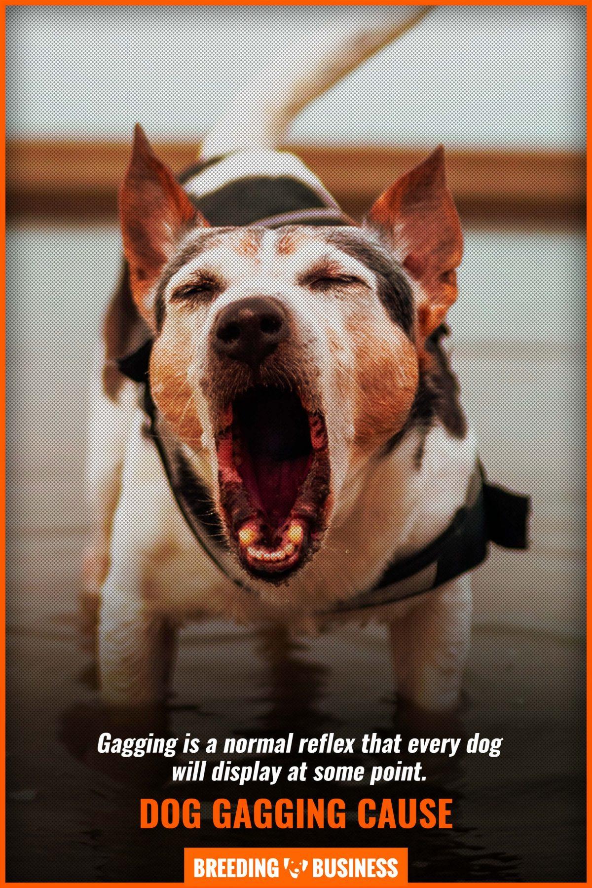 dog gagging cause