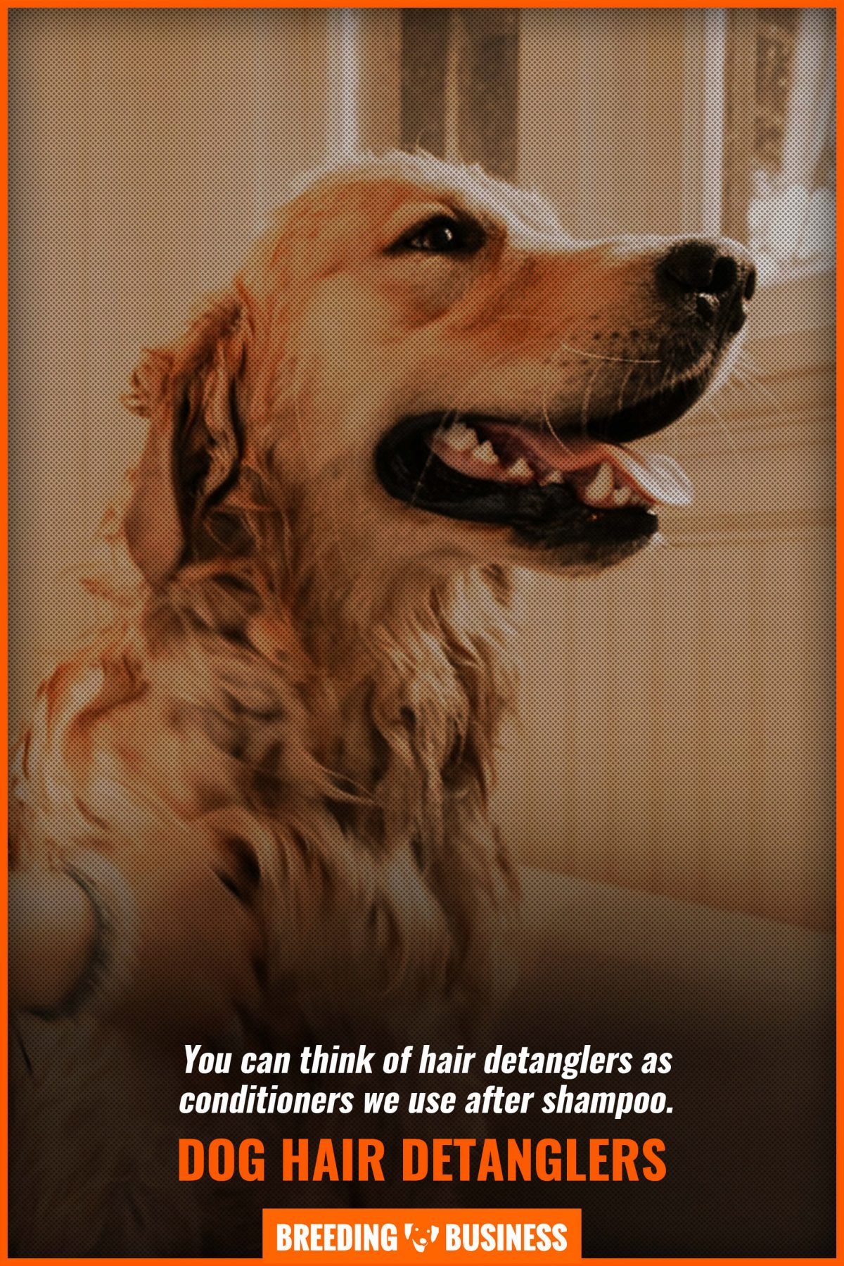 dog-hair-detanglers