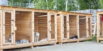 Pros and cons of dog kennels.