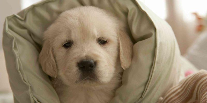 7 Best Dog Pillows & Cushions