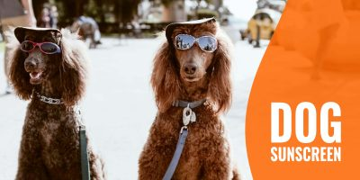 Dog Sunscreen — Use The Right Sunblock For Dogs