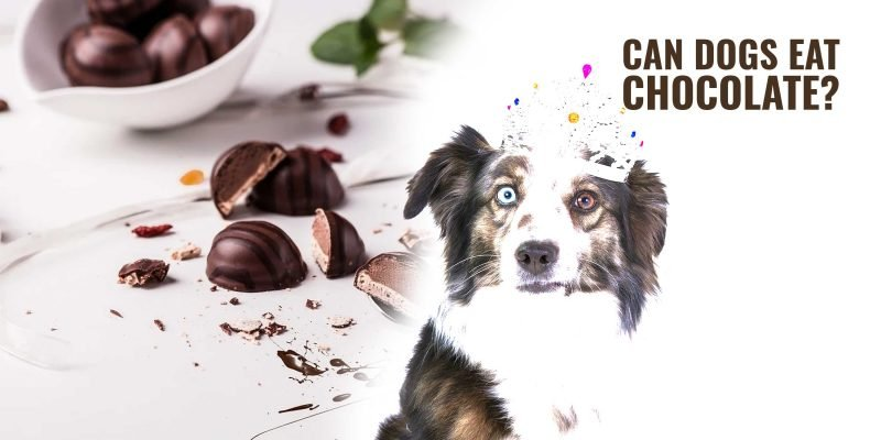 dogs and chocolate