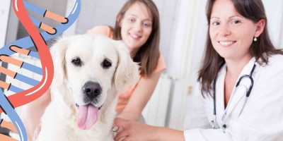 Are Purebred & Mixed-Breed Dogs Equal In Genetic Disorders?