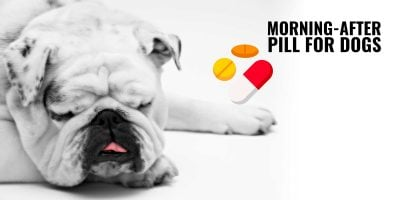 The Morning-After Pill for Dogs
