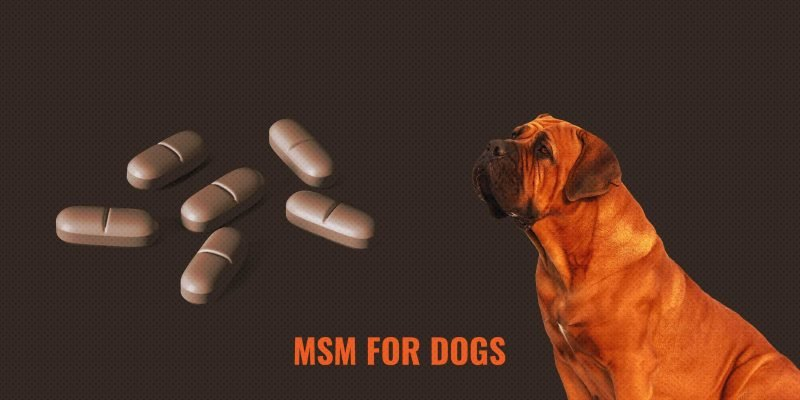 MSM For Dogs — The Best Joint & Arthritis Supplement?