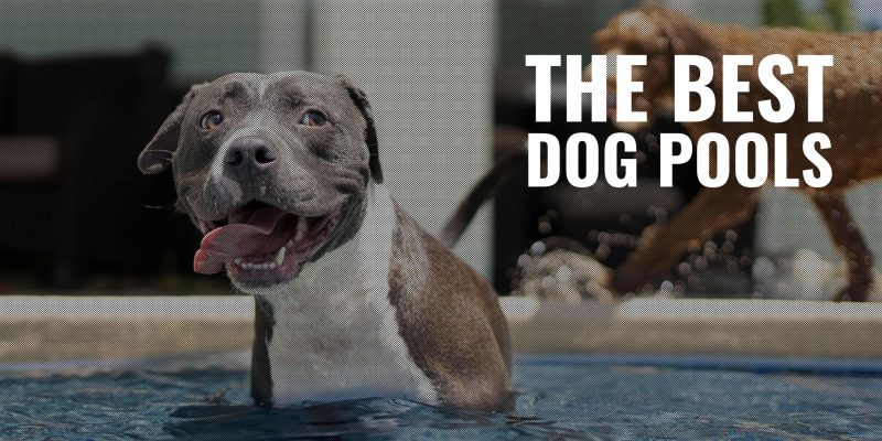 10 Best Dog Pools For a Fun & Cool Summer
