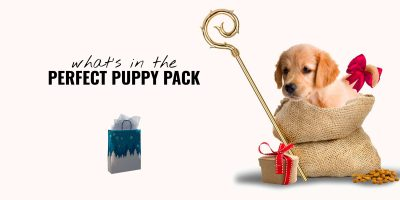 What Should Be In a Puppy Pack? (Paperwork, Toys, etc.)