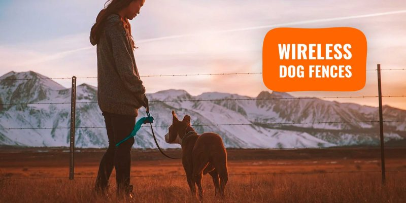 3 Best Wireless Dog Fences — Which Invisible Fence To Get?