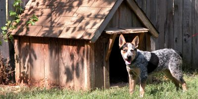 10 Best Dog Houses For Hot Weather – Ventilation, UV Protection, Reviews & FAQs