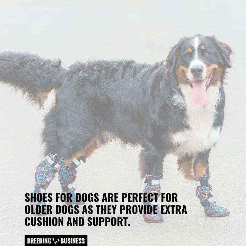 older dog shoes