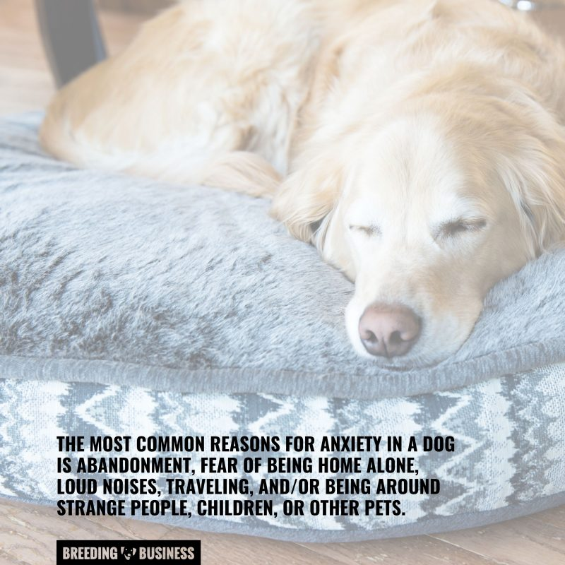 concerns for dogs with anxiety