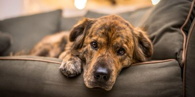 12 Best Couches for Dogs – Brands, Features, Reviews & FAQs