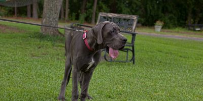 What To Do If Your Dog Is Dehydrated and Won't Drink?