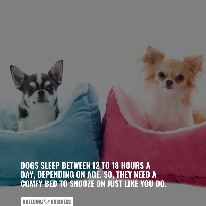 why dogs need beds