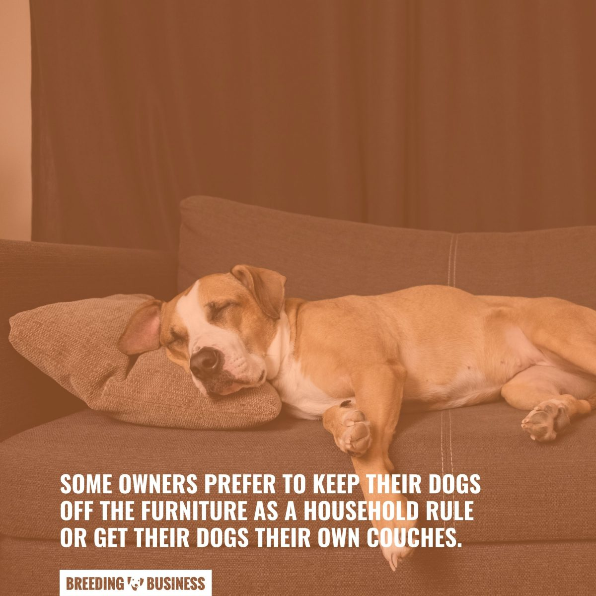 couches dogs love