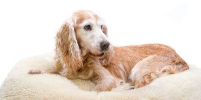 Find out the specific dog beds made for incontinent dogs.