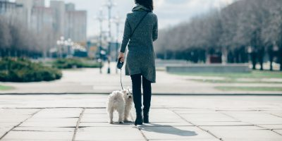 Find out which breed handles the busy streets of cities.