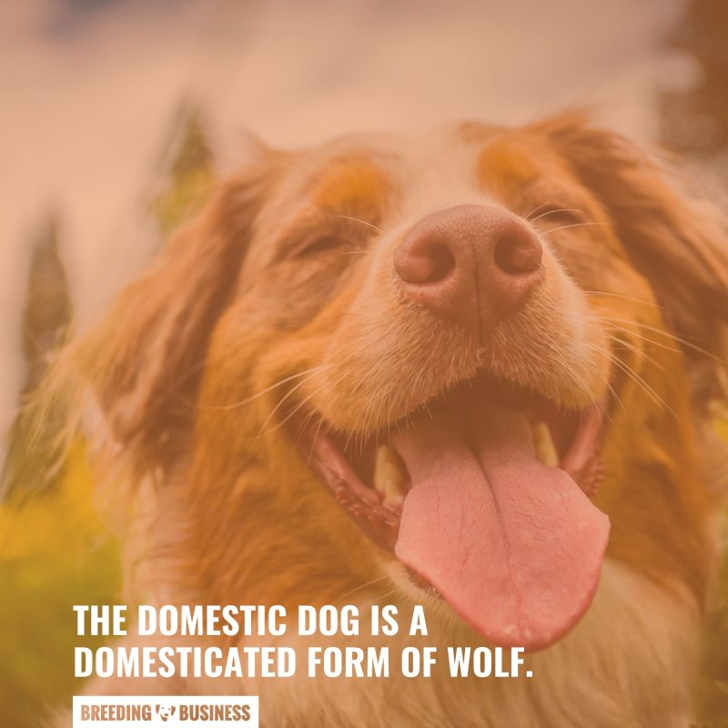 wolves are dogs' ancestors