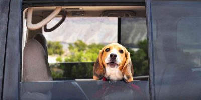 Dog Shipping Services – an overview of modern dog shipping solutions!