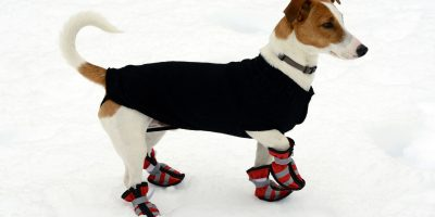 Dog shoes are important for dogs with sensitive paws.