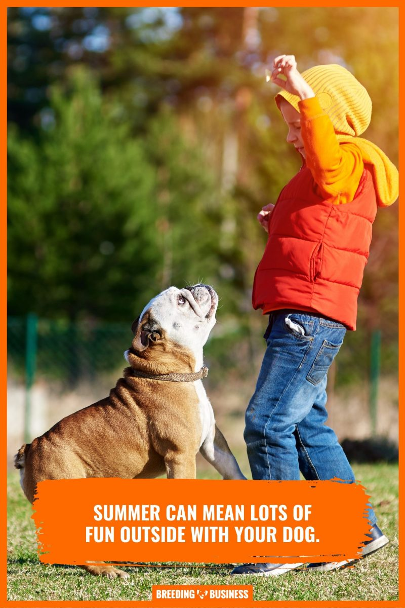caring for dogs in summer