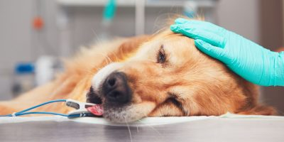 Find out everything you need to know about euthanizing dogs.