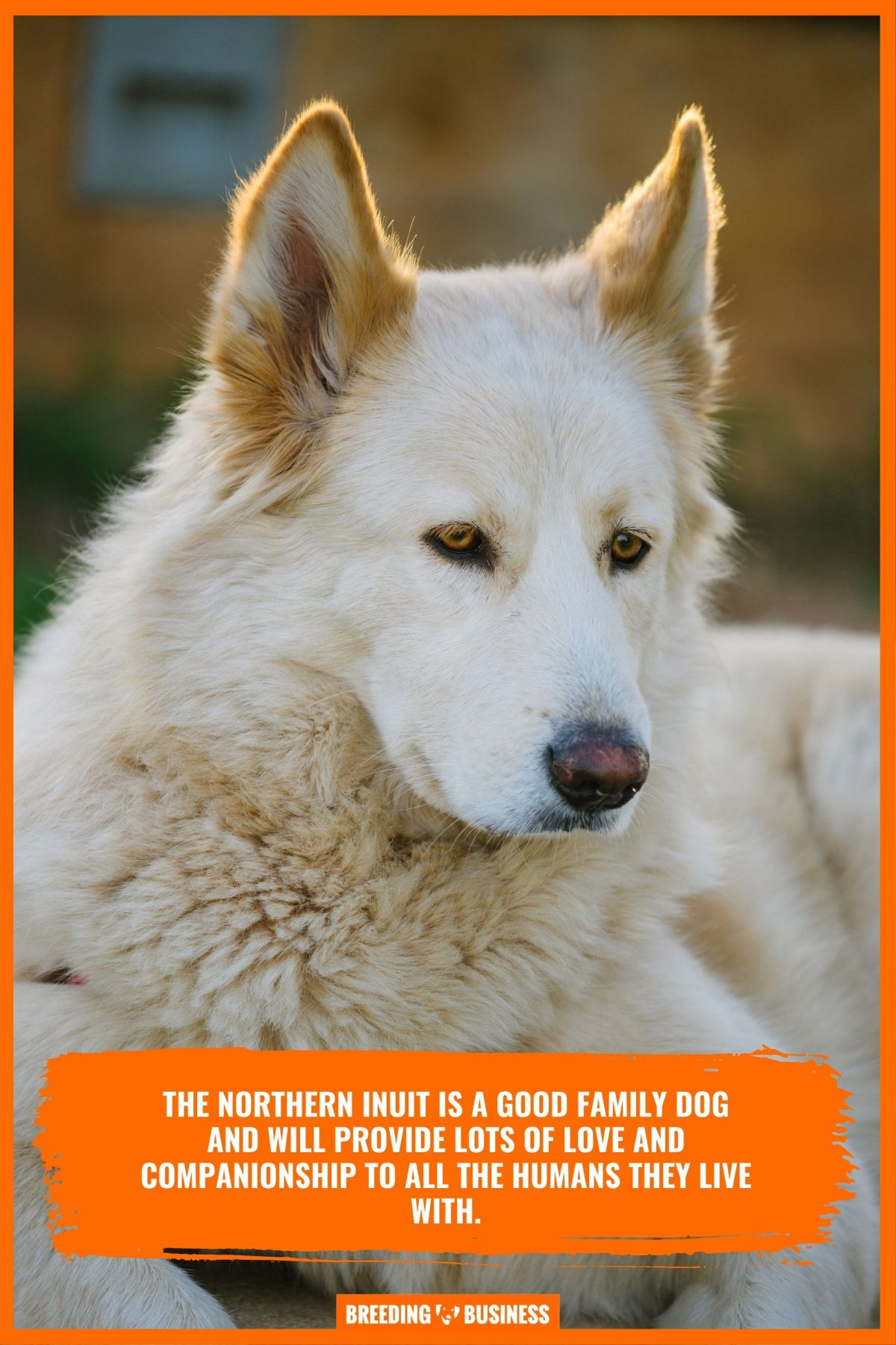 safety level of inuit dogs