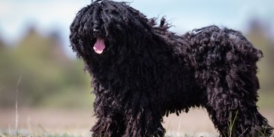 Find out everything you know about this breed!