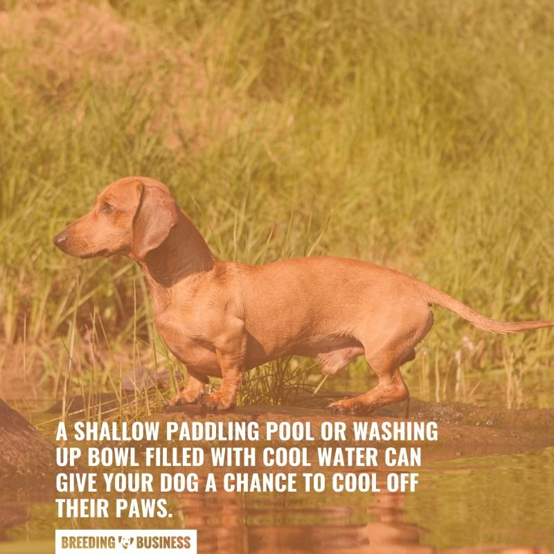 shallow paddling pools for your dog