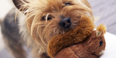 7 Best Fetch Toys For Small Dogs